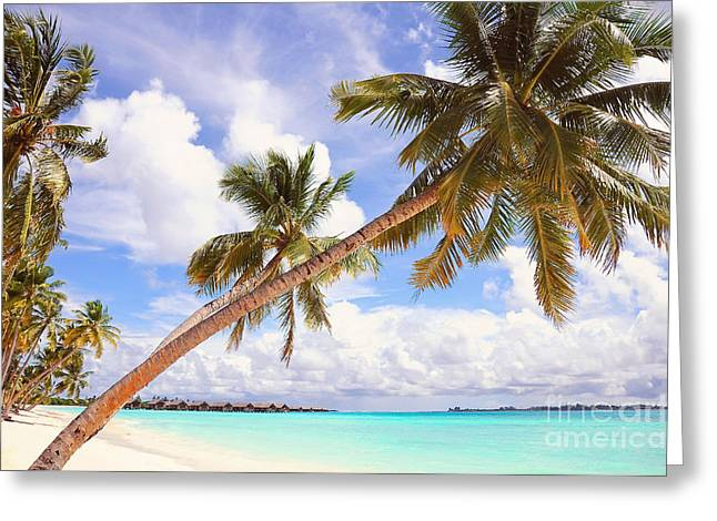 Best Sellers Greeting Cards - Whispering Palms. Maldives Greeting Card by Jenny Rainbow