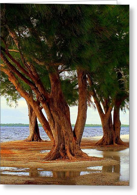 Puddle Greeting Cards - Whispering Trees of Sanibel Greeting Card by Karen Wiles