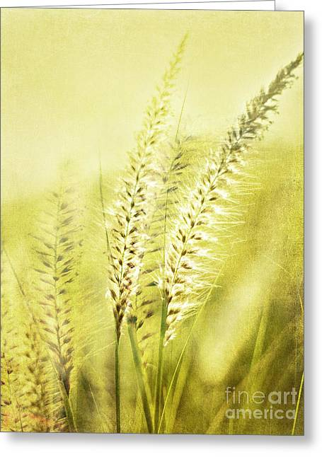 Whispers Greeting Card by Linde Townsend