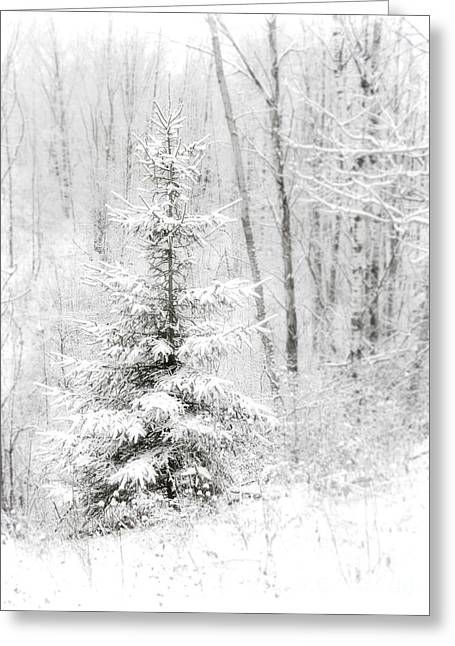 Evergreen With Snow Greeting Cards - Whispers the Snow Greeting Card by Angie Rea