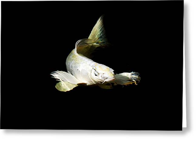 Oranda Greeting Cards - White Angel Greeting Card by Don Mann