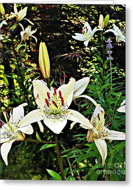 Patterned Marking Greeting Cards - White Asiatic Lilies  Greeting Card by Chris Berry