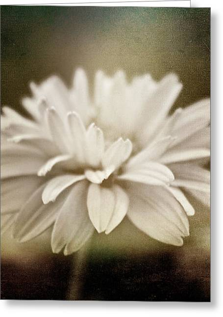 Cindy Grundsten Greeting Cards - White Beauty Greeting Card by Cindy Grundsten