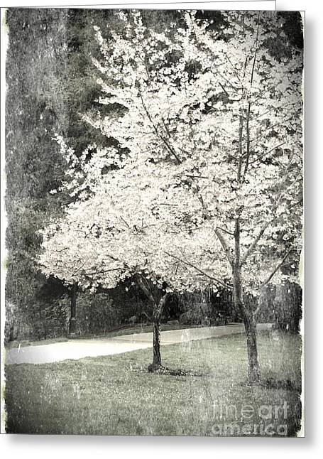 Danuta Bennett Photographs And Art Greeting Cards - White Blooming tree Greeting Card by Danuta Bennett