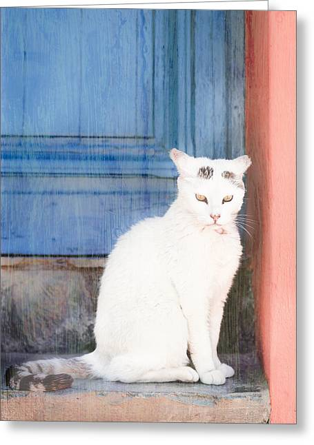 Stepping Stones Greeting Cards - White cat Greeting Card by Tom Gowanlock