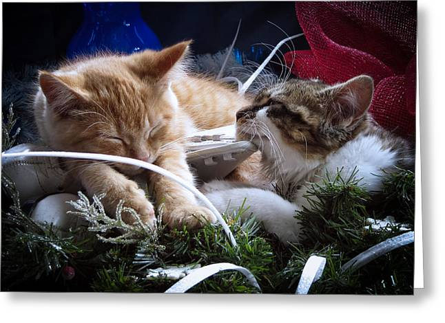 White Christmas W Two Kittens Sleeping - Orange Tabby Cat And Maine Coon Kitty Resting On Ice Skates Greeting Card by Chantal PhotoPix