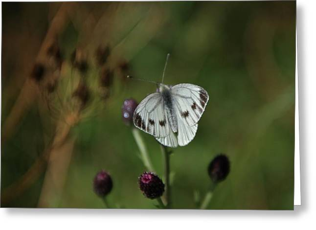 Pieris Rapae Greeting Cards - White Cloud Greeting Card by Odd Jeppesen