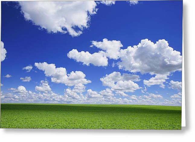 White Clouds In The Sky And Green Meadow Greeting Card by Don Hammond