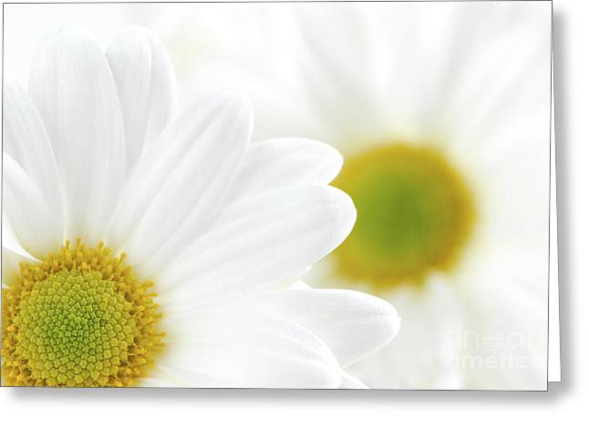 Flower Blossom Photographs Greeting Cards - White daisies Greeting Card by Elena Elisseeva
