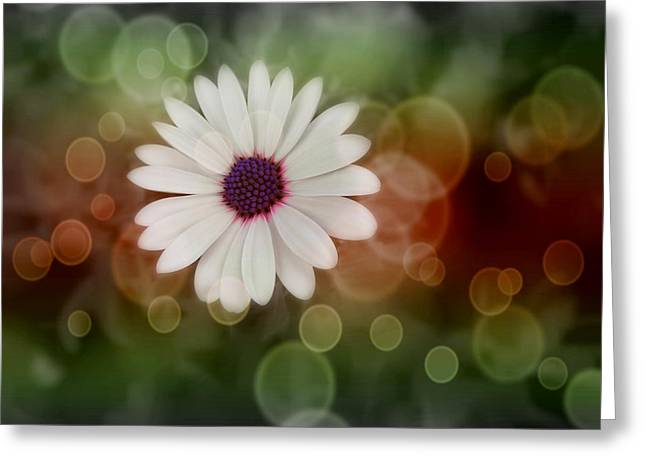 Statigram Greeting Cards - White Daisy in a Sunset Greeting Card by Marianna Mills