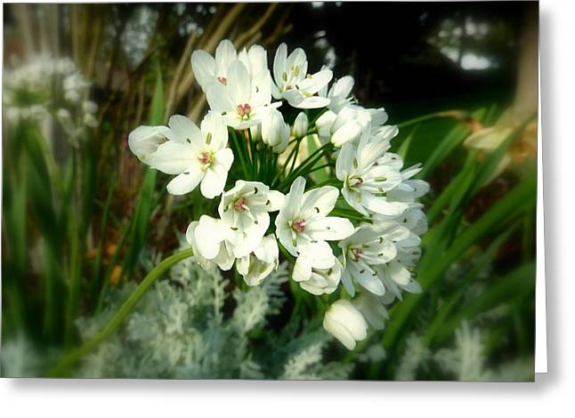 White Flower Cluster Greeting Card by Cindy Wright