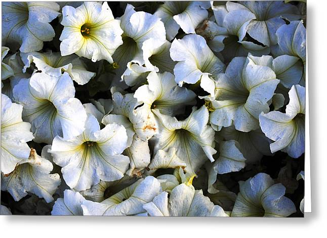 White Flowers At Dusk Greeting Card by Sumit Mehndiratta