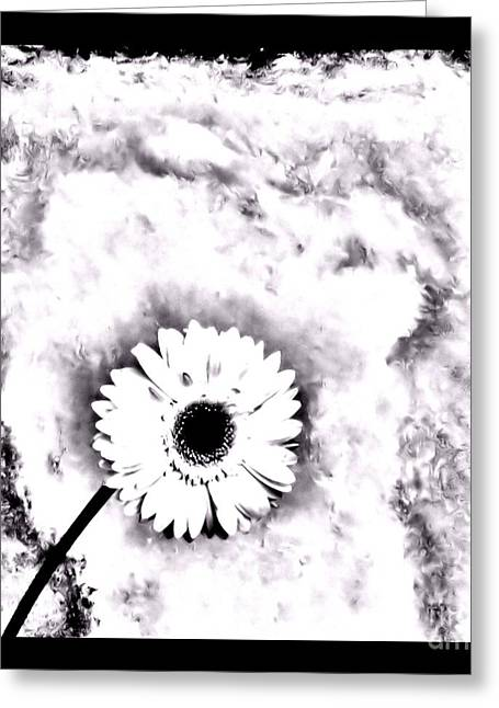 Daisy Framed Prints Greeting Cards - White Gerber Daisy Abstract Greeting Card by Marsha Heiken