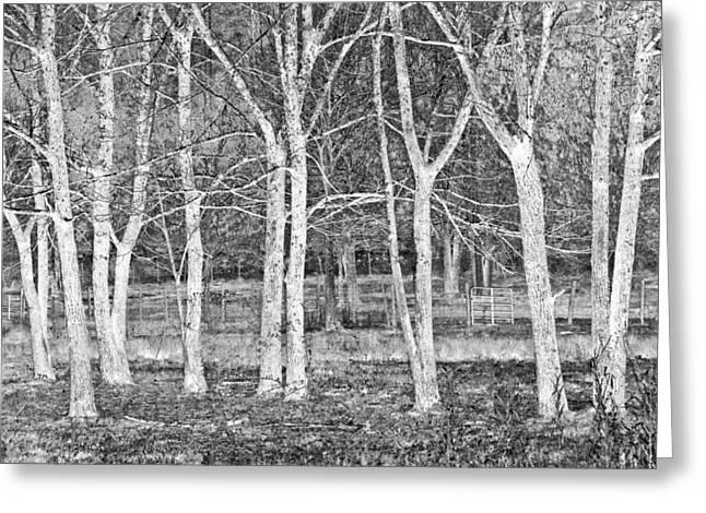 Oak Creek Greeting Cards - White Grove Greeting Card by Debra and Dave Vanderlaan
