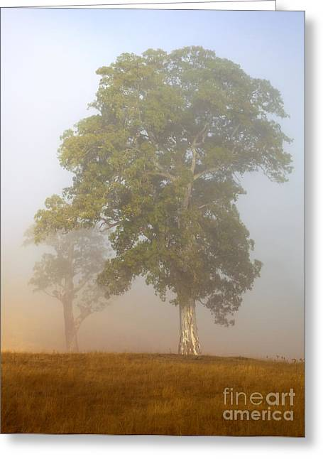 White Photographs Greeting Cards - White Gum Dawn Greeting Card by Mike  Dawson