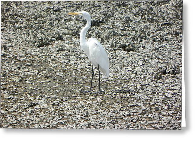 White Heron And Oyster Bar I Greeting Card by Sheri McLeroy