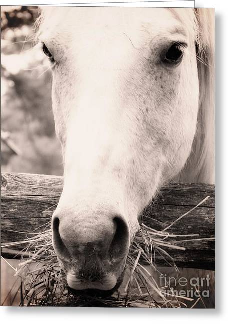 Vintage Greeting Cards - White Horse 2 Greeting Card by Emily Kelley