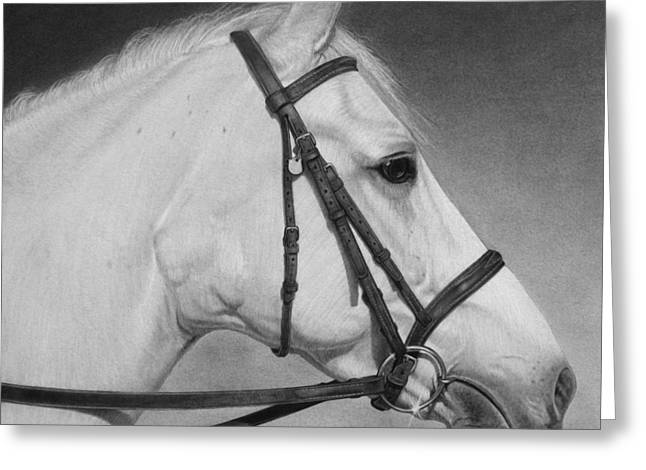 Graphite Greeting Cards - White Horse Greeting Card by Tim Dangaran