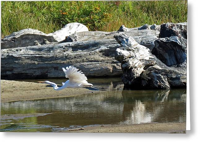 White In Flight Greeting Card by Chris Anderson