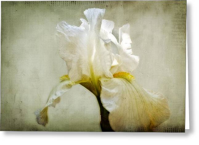 Flower Still Life Prints Greeting Cards - White Iris Greeting Card by Kathy Jennings