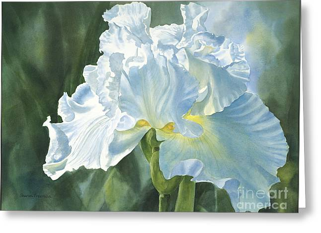Blue Shadows Greeting Cards - White Iris Greeting Card by Sharon Freeman
