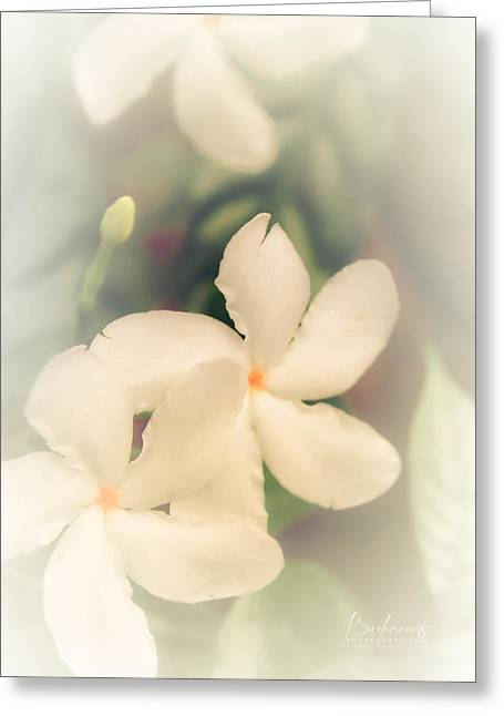 Robin Lewis Greeting Cards - White Jasmine in Bloom Greeting Card by Robin Lewis