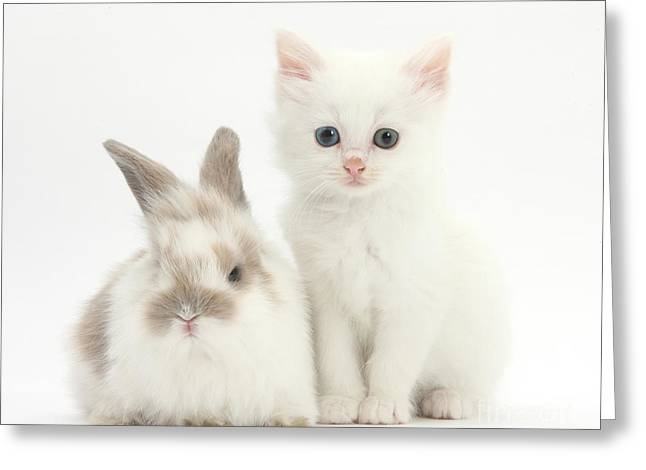 House Pet Greeting Cards - White Kitten And Baby Rabbit Greeting Card by Mark Taylor