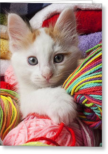 White Kitten Close Up Greeting Card by Garry Gay