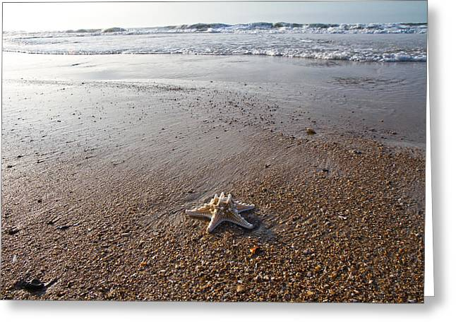 Seastar Greeting Cards - White Knobby Seastar Greeting Card by Betsy A  Cutler