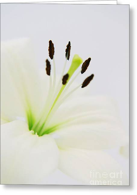 Tenderly Greeting Cards - White lily  Greeting Card by Angela Doelling AD DESIGN Photo and PhotoArt