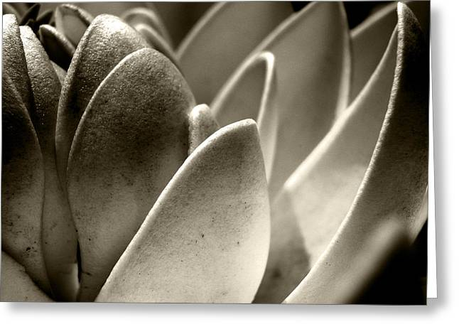 White Lotus In Dusk Greeting Card by Sumit Mehndiratta