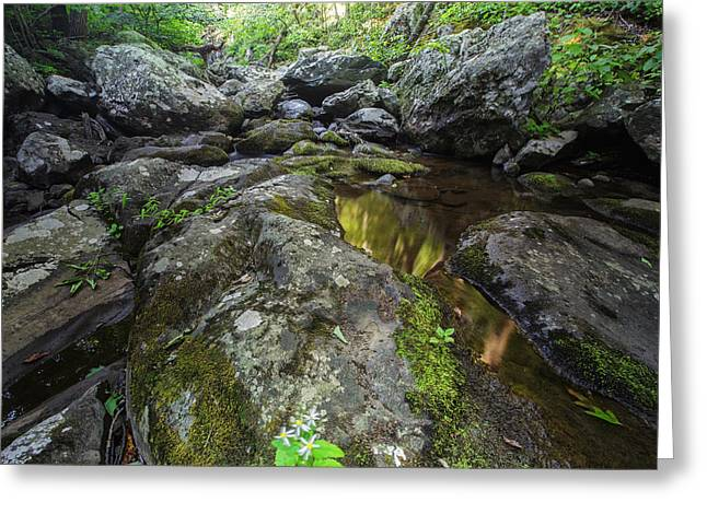 Oak Creek Greeting Cards - White Oak Creek Greeting Card by Rick Berk