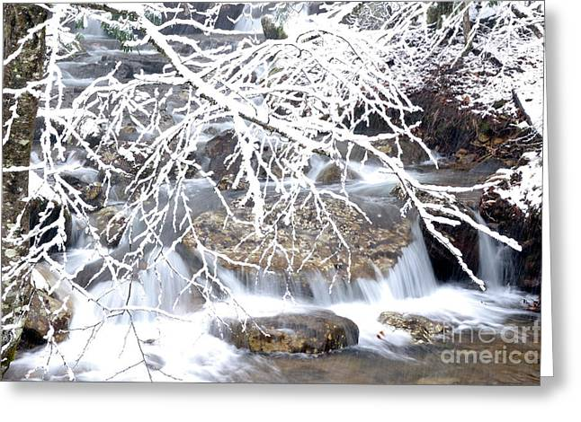 West Virginia Snow Scene Greeting Cards - White Oak Run with Snow Greeting Card by Thomas R Fletcher