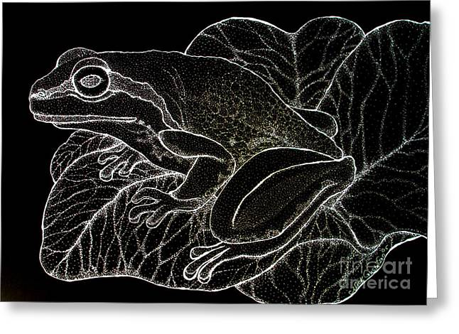 Amphibians Drawings Greeting Cards - White on Black Frog Greeting Card by Nick Gustafson