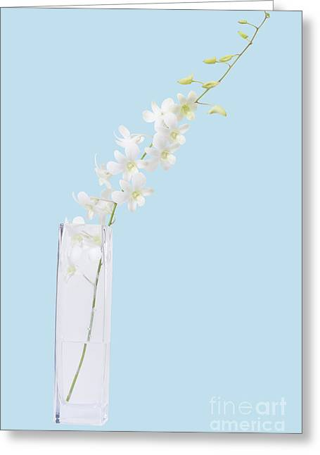 White On Blue Greeting Card by Atiketta Sangasaeng