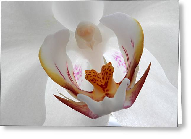 Orchid Canvas Greeting Cards - White on White Greeting Card by Juergen Roth