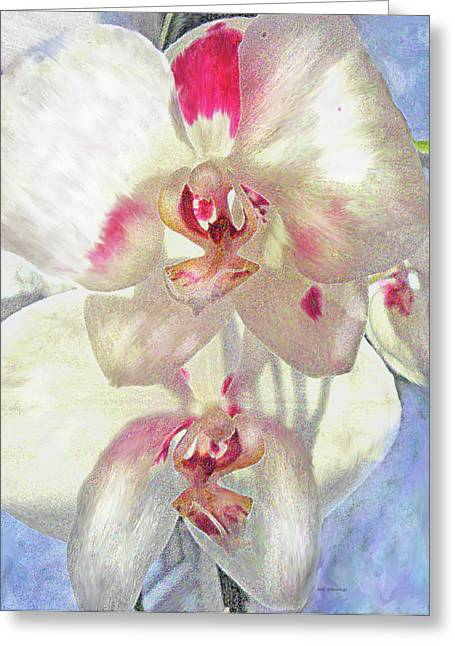 Orchids Digital Art Greeting Cards - White Orchid Greeting Card by Jane Schnetlage