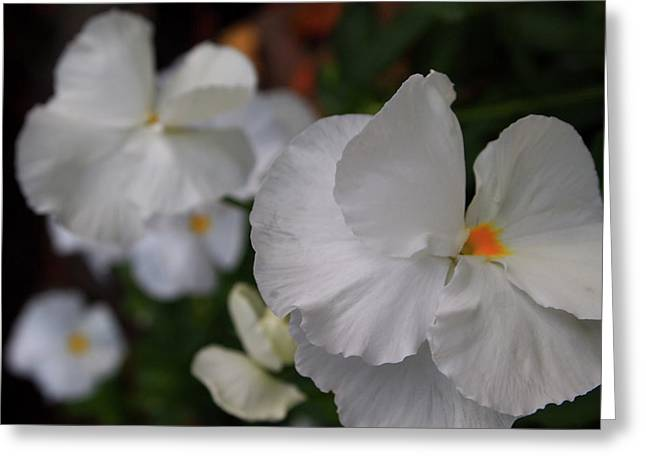 Laura Grisham Greeting Cards - White Pansies Greeting Card by Laura  Grisham