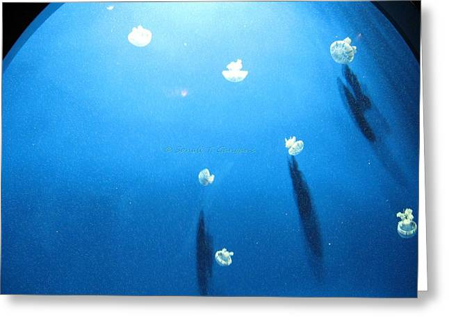 Jelly Fish In Water Greeting Cards - White Parachutes Greeting Card by Sonali Gangane