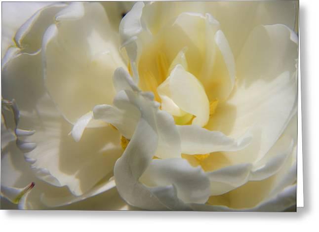 Ruffled Petals Greeting Cards - White Peony Tulip Detail Greeting Card by Teresa Mucha