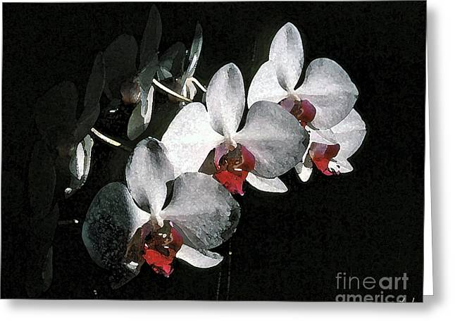 Phalenopsis Greeting Cards - White Phalenopsis Greeting Card by Chris Lynch