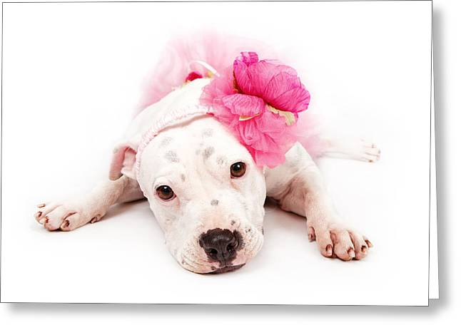 Watchdog Greeting Cards - White Pit Bull Dog Wearing Pink  Greeting Card by Susan  Schmitz