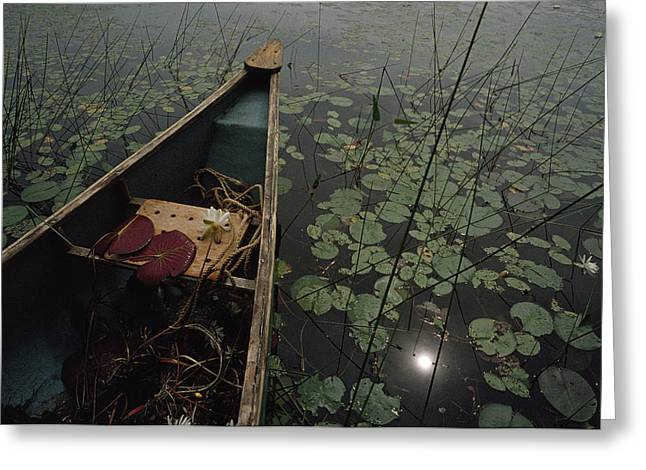 Canoe Photographs Greeting Cards - White Pond Water Lily Plants In A Canoe Greeting Card by Lynn Johnson