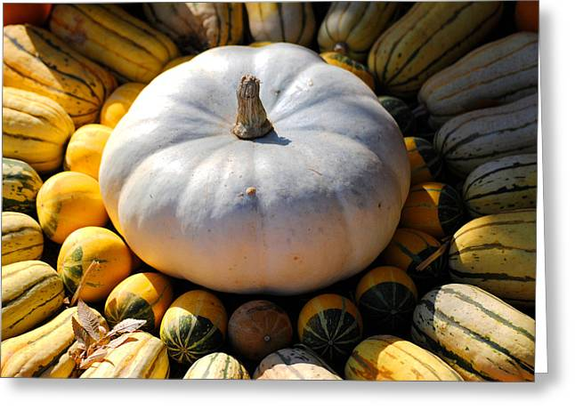White Pumpkin Greeting Card by Jai Johnson