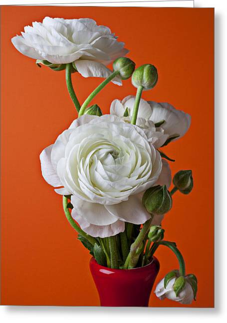 White Ranunculus Close Up In Red Vase Greeting Card by Garry Gay