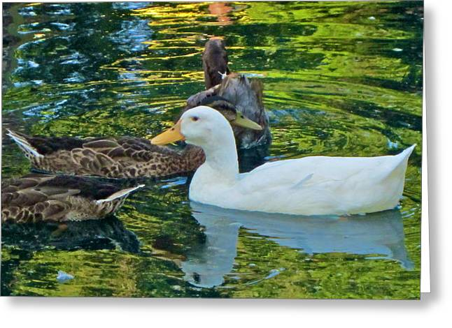 Photographs Digital Art Greeting Cards - White Reflection Greeting Card by Gwyn Newcombe