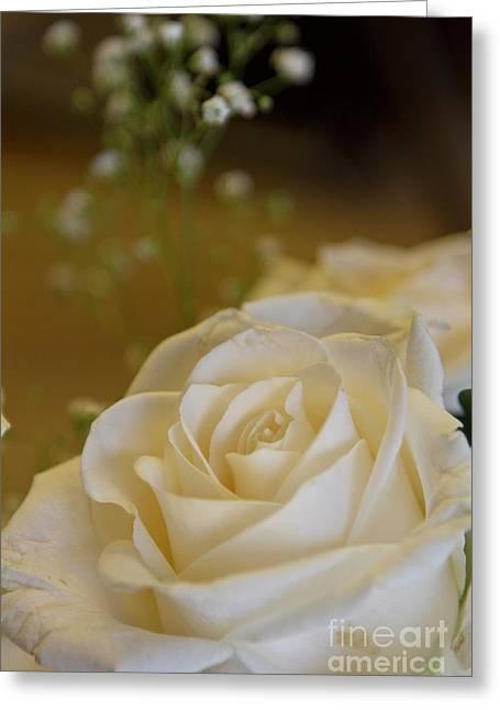 Angels Breath Greeting Cards - White Rose Greeting Card by Carolyn Fox