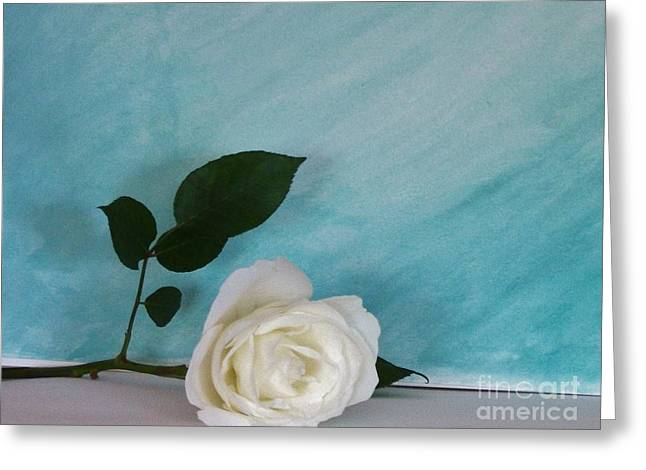 Floral Photos Greeting Cards - White Rose on Aqua Greeting Card by Marsha Heiken