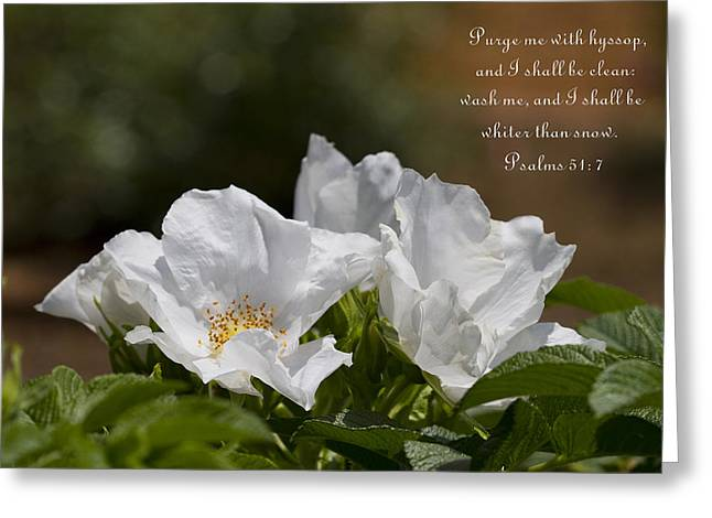 Psalm One Greeting Cards - White Roses - Purge Me With Hyssop Greeting Card by Kathy Clark