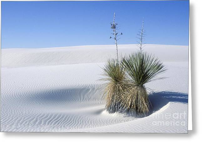 Sand Patterns Greeting Cards - White Sands Dune and Yuccas Greeting Card by Sandra Bronstein